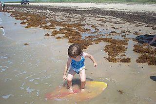 Beach 6-1-08 005
