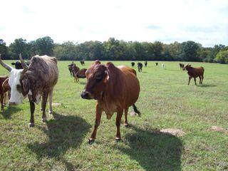 Farm2009 100
